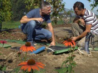 Projekt DOM 2020 | projektowanie ogrodu i wybór ogrodzenia